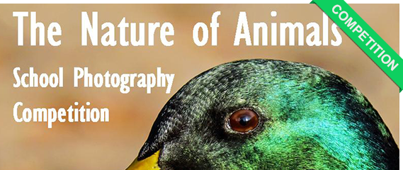 The nature of Animals Photo Competition