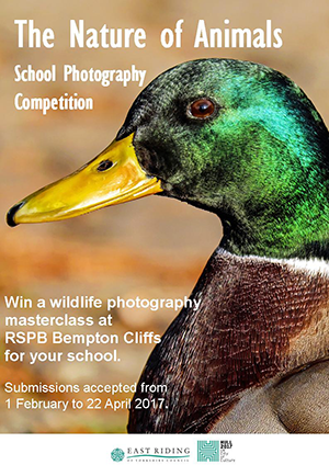 Photography competition A4 poster